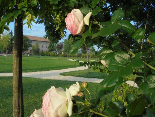 Nel mese di maggio sbocciano le rose: in pochi giorni le diverse varietà che abbiamo piantato colorano il nostro parco.