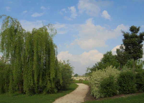 L'esplosione della vegetazione dei salici intorno al piccolo stagno crea ogni anno nuove prospettive per chi cammina nel nostro parco in santa pace...