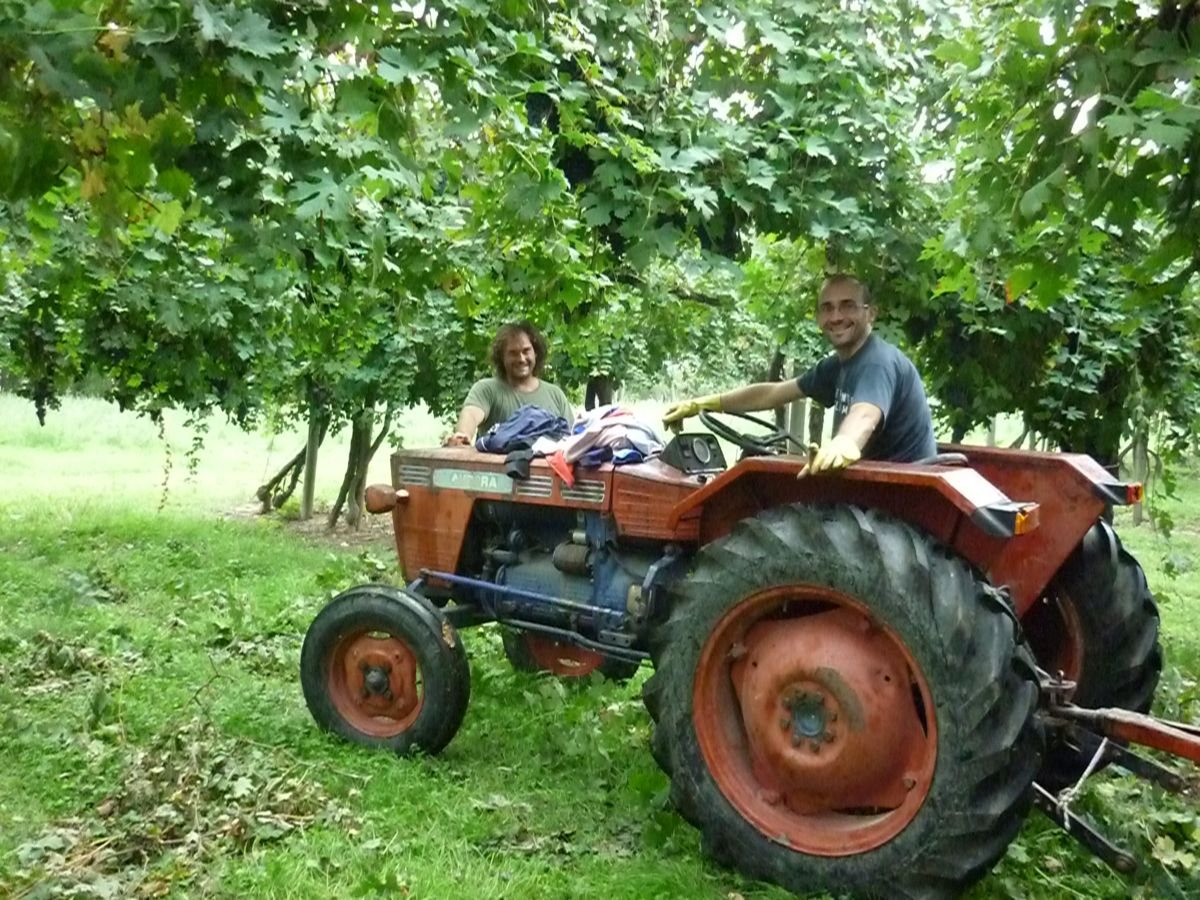 Nostro figlio Tommaso sul trattore che traina il carro d'uva vendemmiata dal gruppo