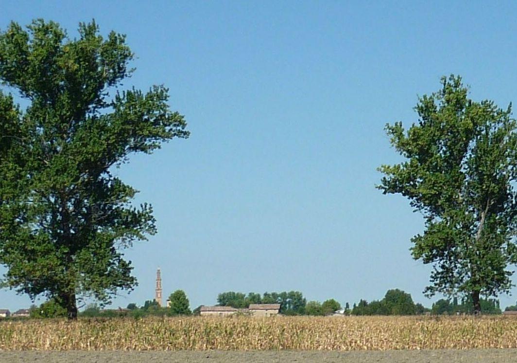 Il nostro campo di cereali all'ombra del campanile della chiesa di Villa Sesso