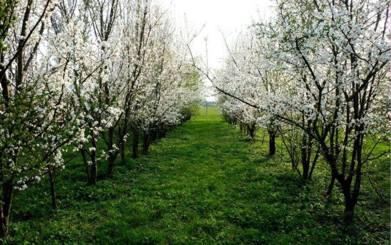Il nostro vivaio a primavera