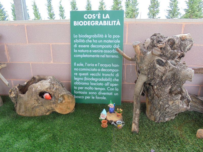 Un particolare degli Alberi delle favole, un bosco pieno di buchi, caverne, solchi creati dalla natura che decompone
