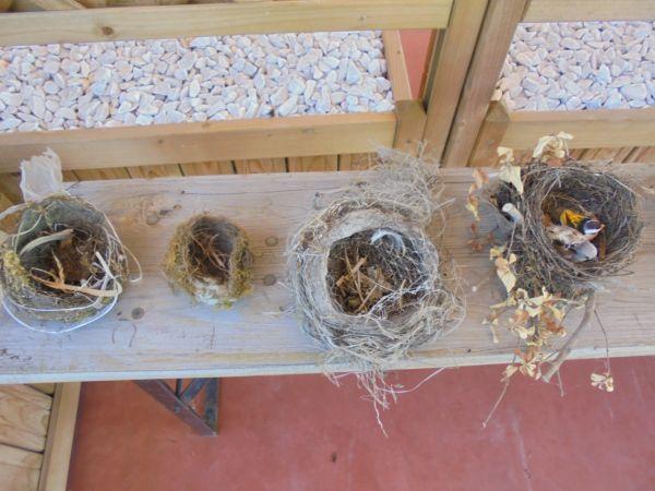 Esposizione di nidi