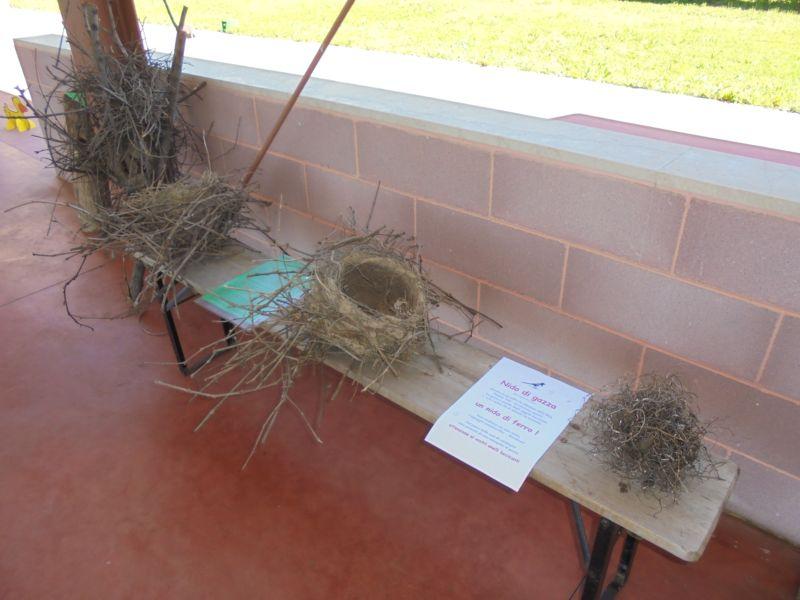I nidi di gazza sono molto numerosi così come le gazze presenti alla casa di campagna
