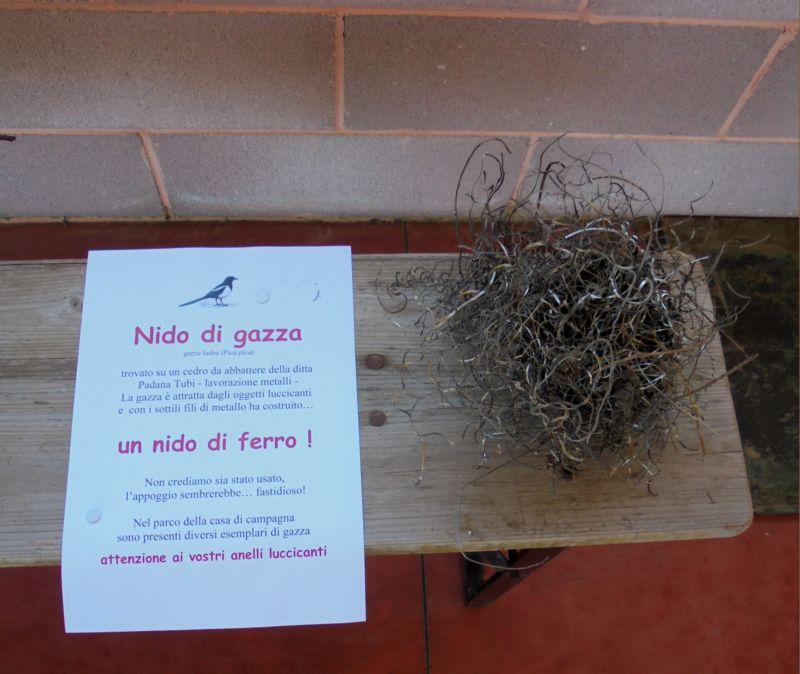 Tra i nidi esposti uno strano nido di ferro costruito da una gazza...