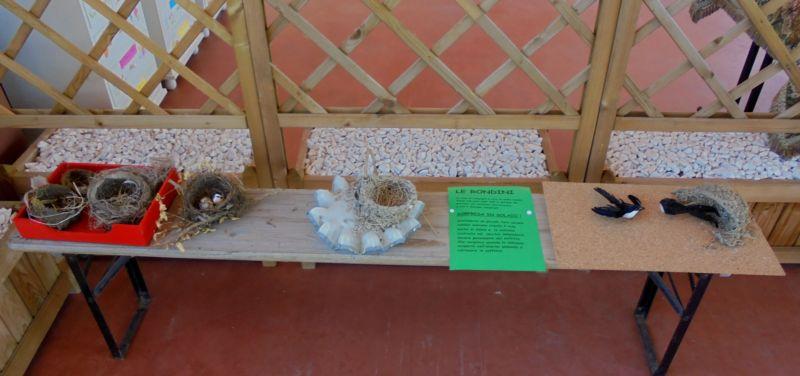I nidi di rondini e di altri uccelli  completati con esemplari finti degli uccelli stessi hanno attirato meglio l'attenzione di grandi e piccini