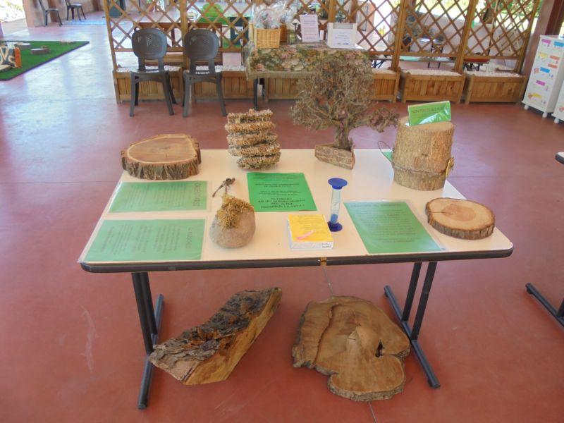 Muschio, tronchi, alveari, sezioni di albero per mostrare tante curiosità e spiegare come rispettare le piante