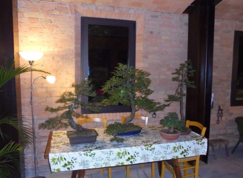 Ogni volta Alberto ci ha portato esemplari maturi di Bonsai provenienti dal suo Giardino in modo da farci capire meglio i contenuti delle sue lezioni.