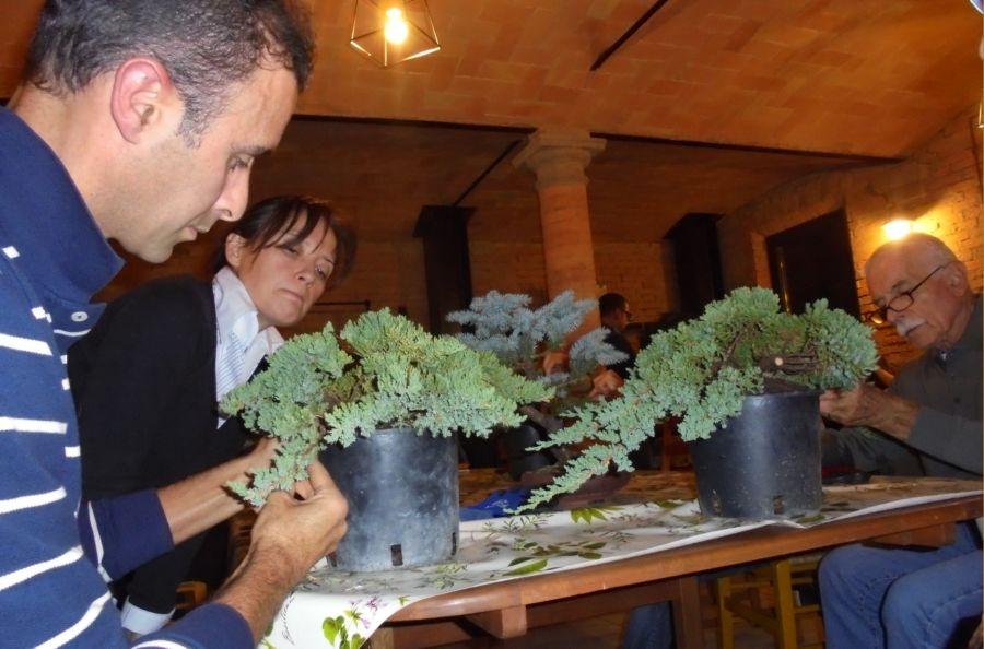 Sempre molto attenti ad osservare il lavoro dell'Istruttore sulla propria pianta e i suoi suggerimenti sempre motivati.