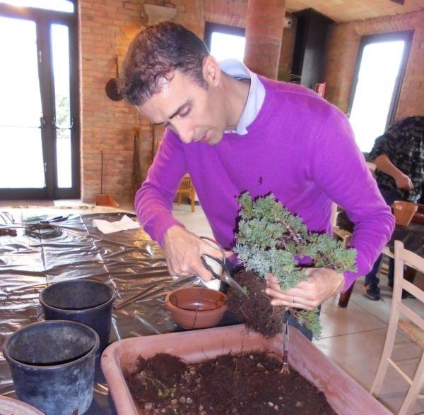 Il maestro Alberto mostra come  tagliare con le forbici le radici in eccesso