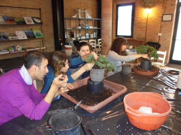 Una volta rinvasato il Bonsai si procede a fare controlli e verifiche sulla forma esterica e lo sviluppo del Bonsai