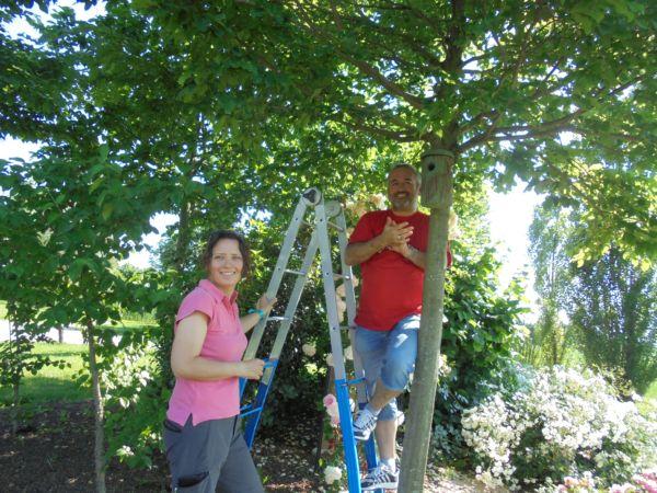 Un altro nido attaccato al carpino, Simone e Silvia dell'agriturismo sono molto soddisfatti: ogni nido un applauso!