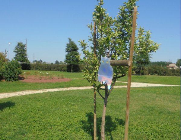 Che paura! riuscirà questo gufo luminoso a tenere lontano gli uccellini dalla frutta?