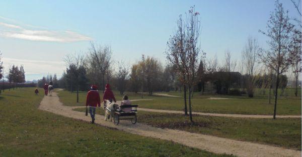 Tutta la  mattina Babbo Natale ha accompagnato i bambini in giro per il parco, i più piccoli sul calesse e i più grandi in sella, con l'aiuto dei suoi due elfi.