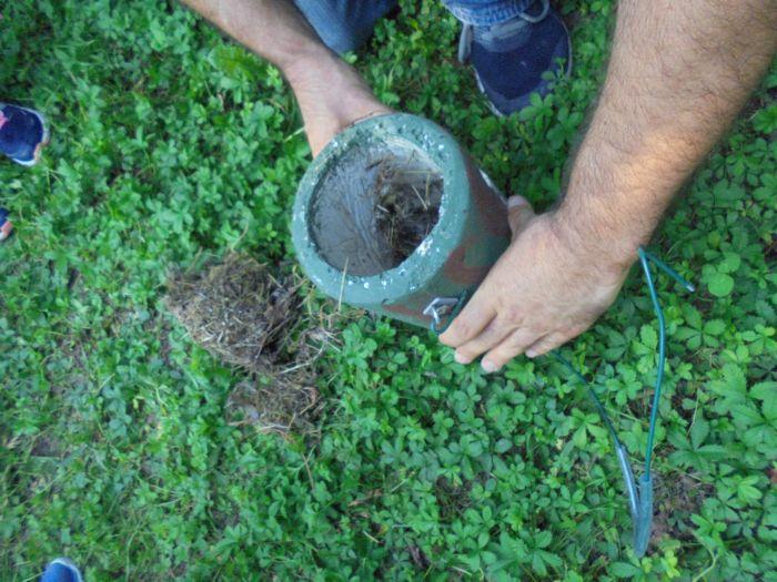 In qualche nido ormai abbandonato abbiamo trovato molte formiche e forbici. Lo abbiamo lasciato a terra in modo che potessero uscire nel prato
