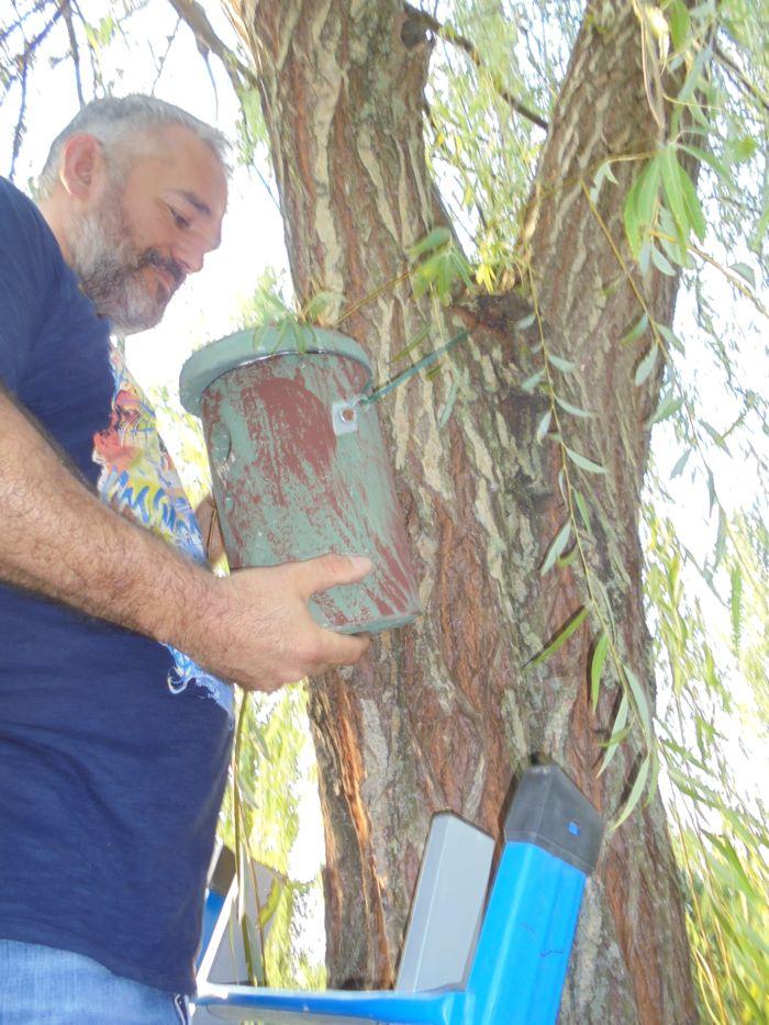 Il salice su sui avevamo attaccato questo nido è cresciuto così tanto da inglobare nel legno il filo di ferro  (protetto da una gomma)  che lo sosteneva.