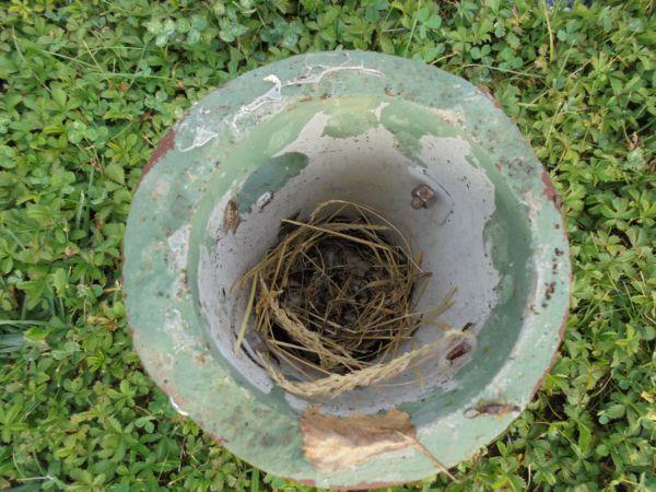 Un nido iniziato e poi abbandonato: qualcosa deve avere disturbato l'uccellino che lavorava...
