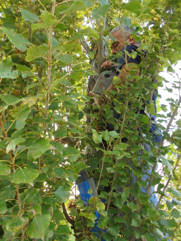 Quel nido è vuoto! I rami dell'albero lo nascondo e poi costituiscono un facile appoggio per possibili nemici che possono raggiungere e danneggiare il nido......