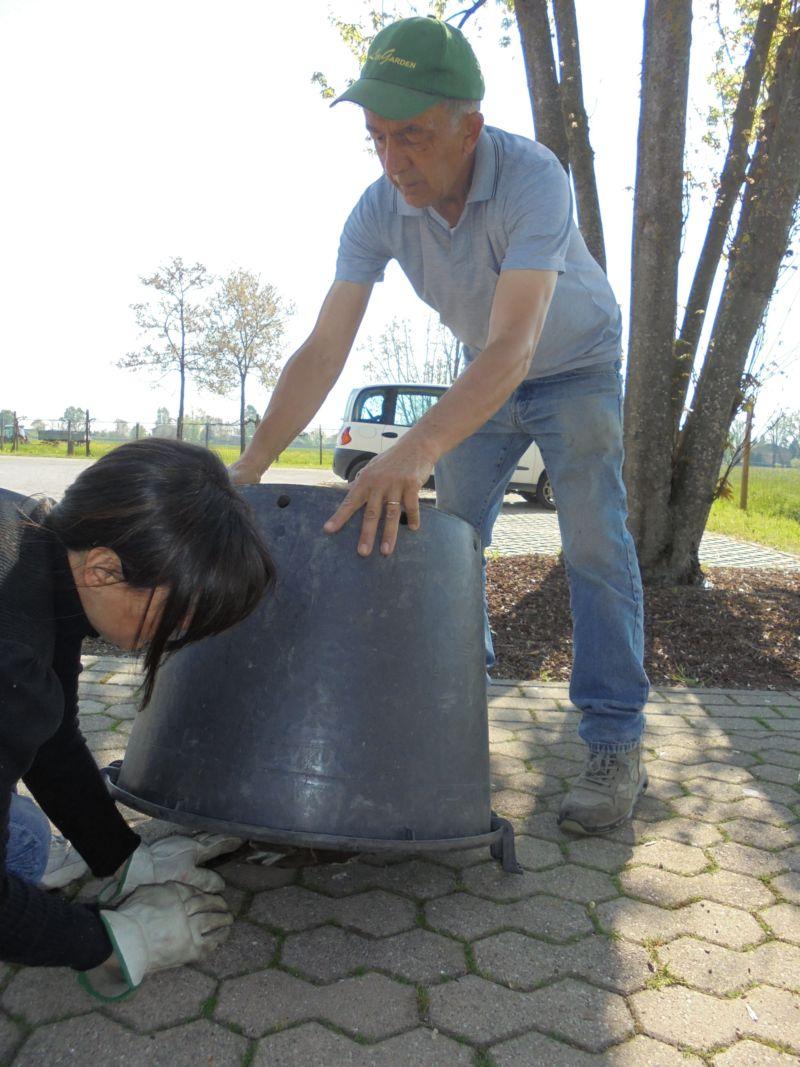 Una vasca da giardinaggio, con i buchi per l'areazione e un bel peso sopra va benissimo!
